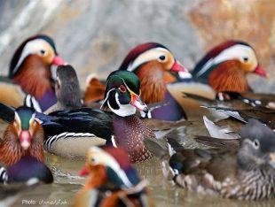 تصاویر/آماده سازی باغ پرندگان قم
